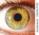green eye macro | Shutterstock . vector #1065415769