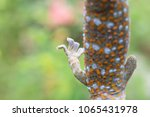 Small photo of Close up Gecko leg, Fingers of Gecko