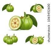 garcinia cambogia vector icon.... | Shutterstock .eps vector #1065452600