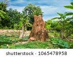 giant soil termitary termites...   Shutterstock . vector #1065478958