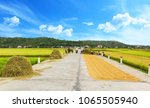 rice field in countryside of... | Shutterstock . vector #1065505940