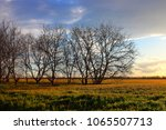 Early Barren Spring Trees On...