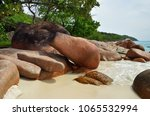 tropical sand beach with... | Shutterstock . vector #1065532994