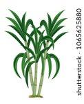 sugar cane plant vector design | Shutterstock .eps vector #1065625880