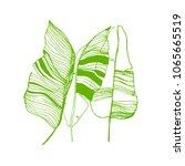 banana leaves illustration. set ... | Shutterstock .eps vector #1065665519