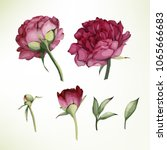 peonies and leaves. vector... | Shutterstock .eps vector #1065666683