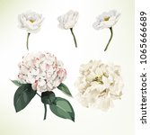 white flowers and leaves.... | Shutterstock .eps vector #1065666689