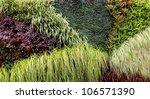 Vertical Garden With Various...