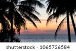 silhouettes of tropical palms... | Shutterstock . vector #1065726584