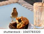 Little Bird Stealing Cake...