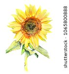 Watercolor Sunflower Flower...
