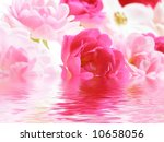 Close-up of pink rose flowers reflected in water - stock photo