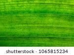 green leaf texture background... | Shutterstock . vector #1065815234