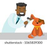 african american veterinarian... | Shutterstock .eps vector #1065839300