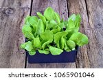 farming cultivation ... | Shutterstock . vector #1065901046