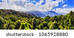 evergreen canopy of temperate...   Shutterstock . vector #1065928880