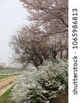 spring season flowers. | Shutterstock . vector #1065986813