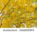 closeup of yellow flower for...   Shutterstock . vector #1066005893