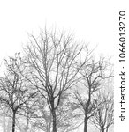 tree silhouette forest on white ... | Shutterstock . vector #1066013270