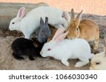 Stock photo rabbits in the zoo 1066030340