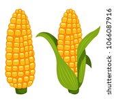 corn cobs vector cartoon flat... | Shutterstock .eps vector #1066087916