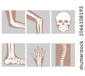 human joints  knee   elbow  ... | Shutterstock .eps vector #1066108193