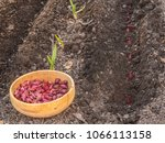 a wooden bowl with a red onion... | Shutterstock . vector #1066113158