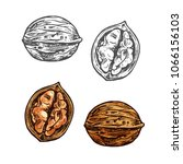 walnut fruit sketch of whole... | Shutterstock .eps vector #1066156103
