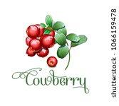wild northern berries... | Shutterstock .eps vector #1066159478