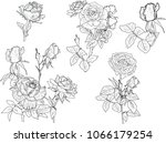 illustration with small rose... | Shutterstock .eps vector #1066179254