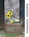 Sunflower In A Barrel