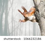 Stock photo cute red squirrel sitting on tree trunk on blurred forest background 1066232186
