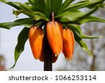 close up of the orange... | Shutterstock . vector #1066253114