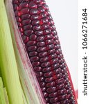 Small photo of the pigment kernels purple corn its vivid color,corn stalks with cob and green husk on white background