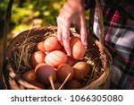 the lifestyle of the farm in... | Shutterstock . vector #1066305080