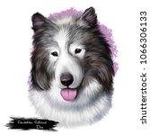canadian eskimo dog breed... | Shutterstock . vector #1066306133