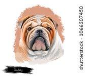 bulldog dog breed isolated on...   Shutterstock . vector #1066307450