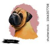 bullmastiff dog breed isolated...   Shutterstock . vector #1066307708