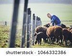 sunny morning on the rural farm....   Shutterstock . vector #1066332386