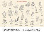 best medicinal herbs for hair... | Shutterstock .eps vector #1066342769