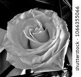 a rose    Shutterstock . vector #1066355066