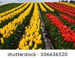 Red Yellow Tulip Hills Flowers...