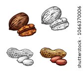 nut and bean isolated sketch... | Shutterstock .eps vector #1066370006