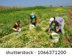 july 17 2016  farmer family... | Shutterstock . vector #1066371200