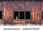 a cat in a barn window while... | Shutterstock . vector #1066374029