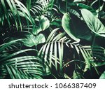 beautiful of tropical leaves | Shutterstock . vector #1066387409