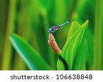 Dragonfly Sitting On Water Plant
