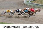 Greyhound  Magyar Ag R