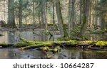 Spring Landscape Of Old Forest...
