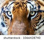 the big bengal tiger | Shutterstock . vector #1066428740